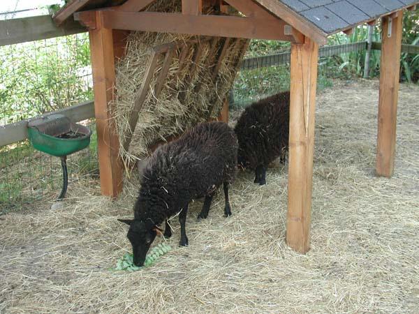 Maison du mouton – Vasles
